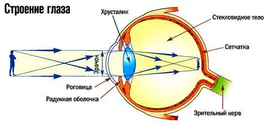 1 2 Как устроен глаз.gif